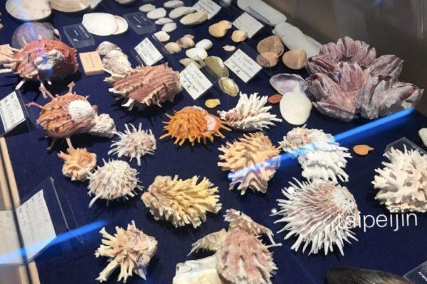 古字利オーシャンタワーの貝殻博物館