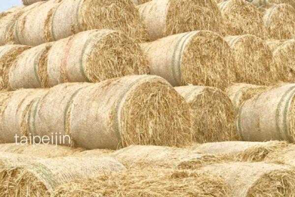 雲林金億洋菇農埸の干草