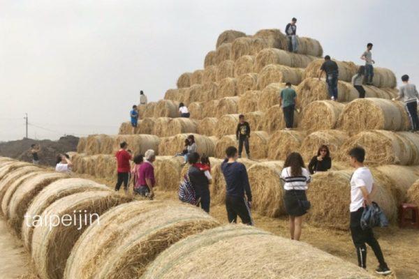 雲林金億洋菇農埸のピラミッド
