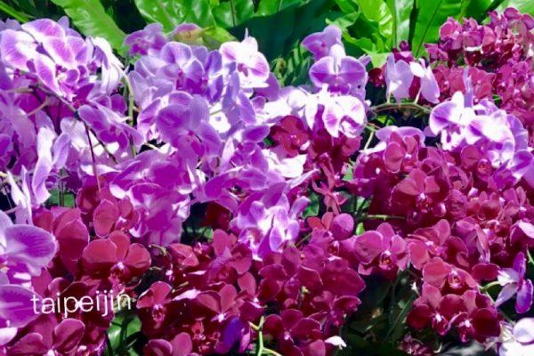 台中花博の蘭の花