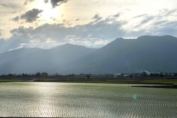 台東縣池上鄉の道