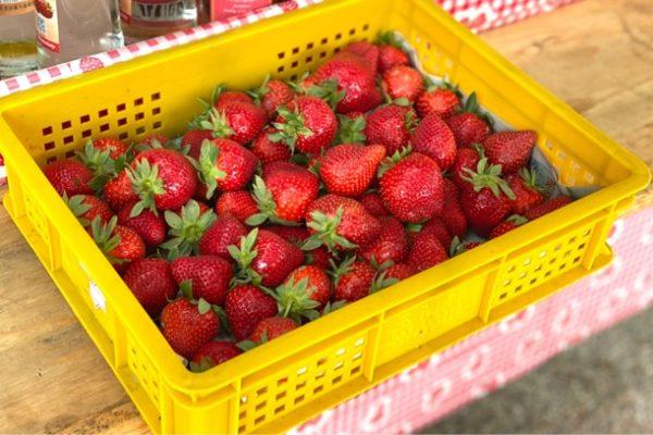 イチゴの販売