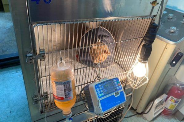 隔離入院の猫